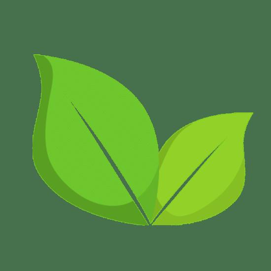 Pflanzliches Eiweiss